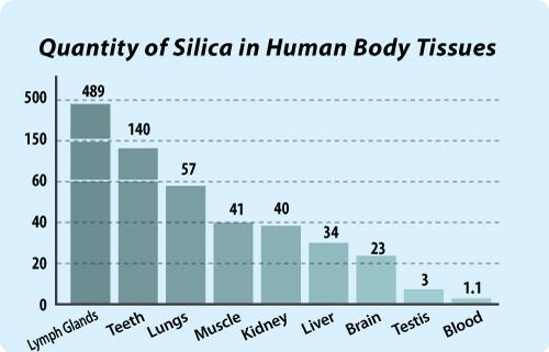 Silica In Body