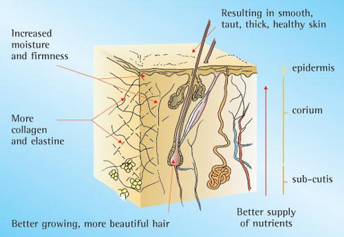 Silica Anti Aging